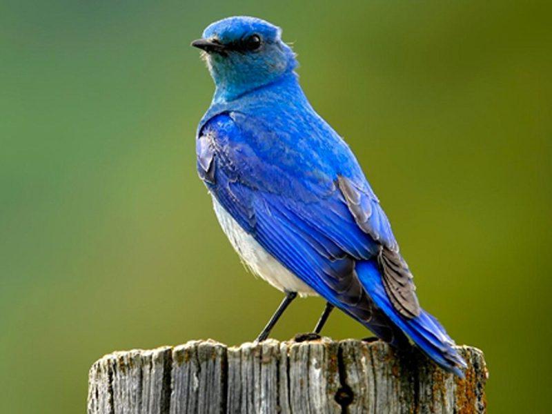 Défense des amateurs d'oiseaux, loisir populaire